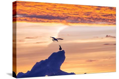 Gulls on Glacial Ice at Sunset-Rich Reid-Stretched Canvas Print
