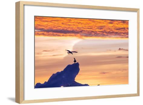 Gulls on Glacial Ice at Sunset-Rich Reid-Framed Art Print
