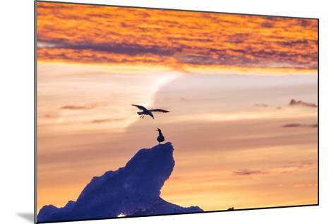Gulls on Glacial Ice at Sunset-Rich Reid-Mounted Photographic Print