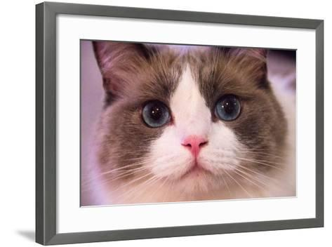 Close Up Portrait of a Blue-Eyed Cat Looking into the Camera-Stephen St^ John-Framed Art Print