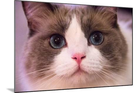 Close Up Portrait of a Blue-Eyed Cat Looking into the Camera-Stephen St^ John-Mounted Photographic Print