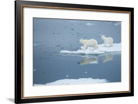 A Polar Bear and Cub Stand on Melting Pack Ice-Michael Melford-Framed Art Print