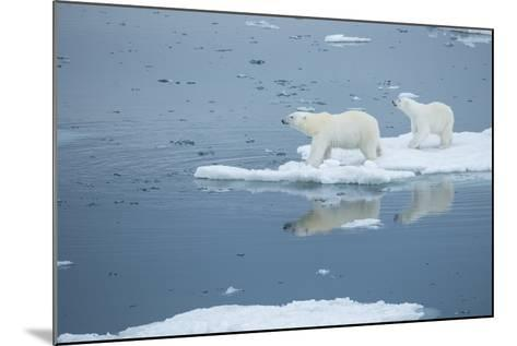 A Polar Bear and Cub Stand on Melting Pack Ice-Michael Melford-Mounted Photographic Print