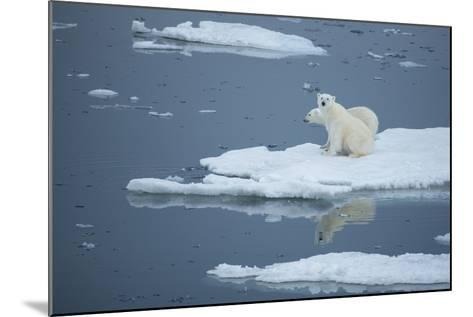 A Polar Bear and Cub on Pack Ice-Michael Melford-Mounted Photographic Print
