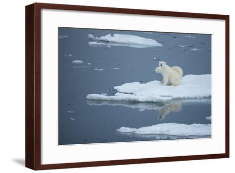 A Polar Bear and Cub on Pack Ice-Michael Melford-Framed Art Print
