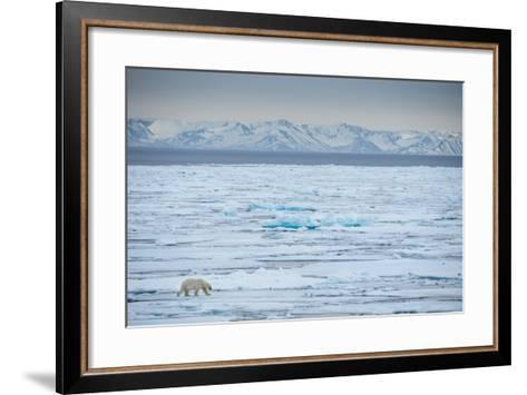 A Lone Polar Bear Traverses the Pack Ice on Hinlopen Strait-Michael Melford-Framed Art Print