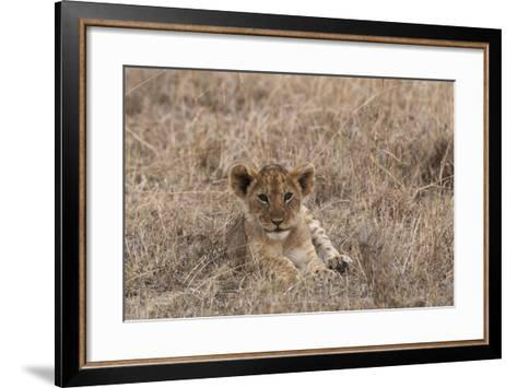 Portrait of a Lion Cub, Panthera Leo, Lying in the Grass-Sergio Pitamitz-Framed Art Print