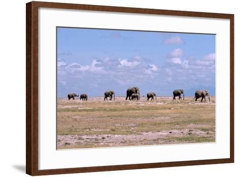 A Herd of Elephants Ambles in Line across the Plains in Amboseli National Park-Shannon Switzer-Framed Art Print