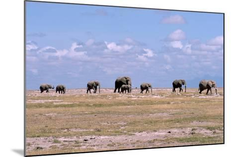 A Herd of Elephants Ambles in Line across the Plains in Amboseli National Park-Shannon Switzer-Mounted Photographic Print