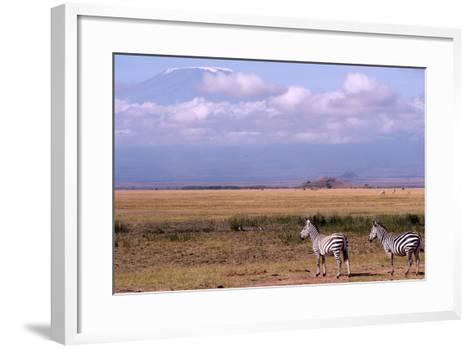Mount Kilimanjaro Looms Above Zebras Razing in Amboseli National Park-Shannon Switzer-Framed Art Print