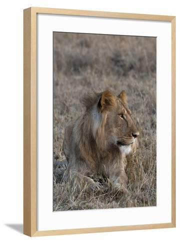 Portrait of a Male Lion, Panthera Leo, at Rest-Sergio Pitamitz-Framed Art Print