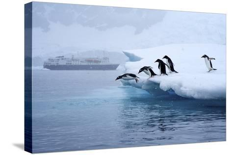 Gentoo Penguins Jump Off of the Ice into the Water Near a Cruise Ship-Jim Richardson-Stretched Canvas Print