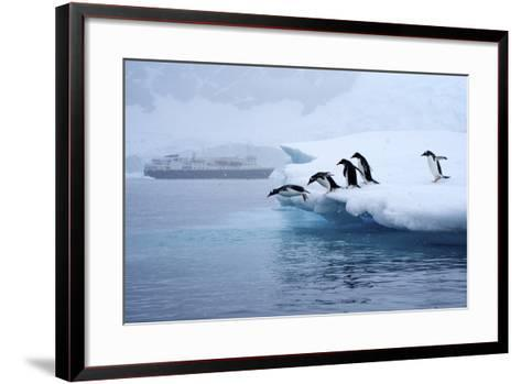 Gentoo Penguins Jump Off of the Ice into the Water Near a Cruise Ship-Jim Richardson-Framed Art Print