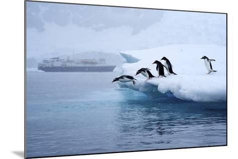 Gentoo Penguins Jump Off of the Ice into the Water Near a Cruise Ship-Jim Richardson-Mounted Photographic Print