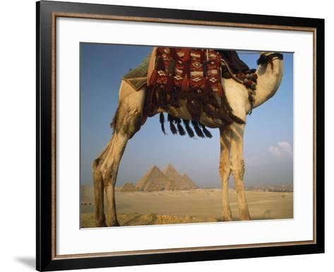 Looking under Camel to Great Pyramids of Giza-Design Pics Inc-Framed Art Print