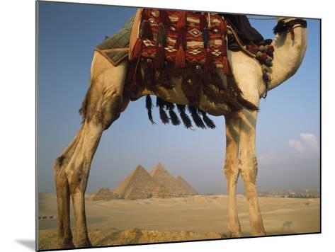Looking under Camel to Great Pyramids of Giza-Design Pics Inc-Mounted Photographic Print