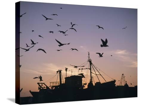 Sea Gulls Flying over Fishing Boats at Dusk in the Harbor-Design Pics Inc-Stretched Canvas Print