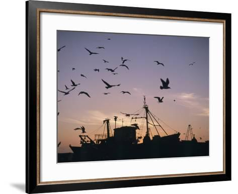 Sea Gulls Flying over Fishing Boats at Dusk in the Harbor-Design Pics Inc-Framed Art Print