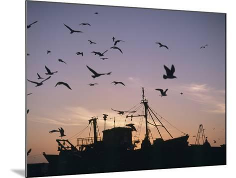 Sea Gulls Flying over Fishing Boats at Dusk in the Harbor-Design Pics Inc-Mounted Photographic Print