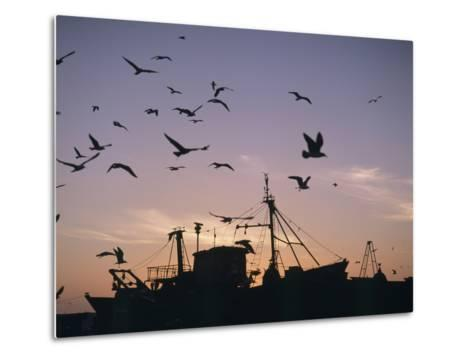 Sea Gulls Flying over Fishing Boats at Dusk in the Harbor-Design Pics Inc-Metal Print