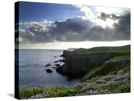 Sunlight Streams Through Clouds onto Sea Pinks at Dunluce Castle on Northern Ireland's North Coast-Chris Hill-Stretched Canvas Print