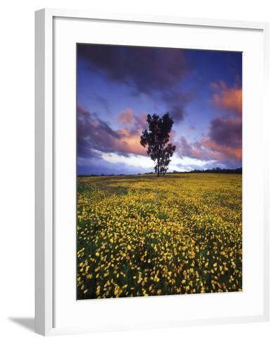 Wildflowers and Lone Tree at Pakhuis Pass, Cederberg Wilderness Area-Keith Ladzinski-Framed Art Print
