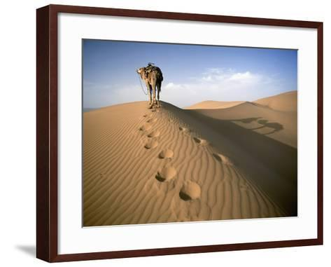 Blue Man Tribe of Saharan Traders with Camel at Dawn in Dunes-Design Pics Inc-Framed Art Print