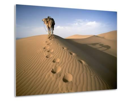 Blue Man Tribe of Saharan Traders with Camel at Dawn in Dunes-Design Pics Inc-Metal Print