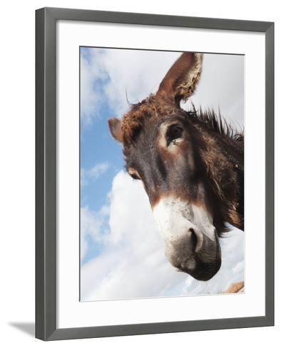 Donkey's Head Against a Blue Sky with Cloud; Charente, France-Design Pics Inc-Framed Art Print