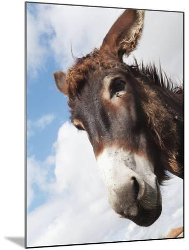 Donkey's Head Against a Blue Sky with Cloud; Charente, France-Design Pics Inc-Mounted Photographic Print
