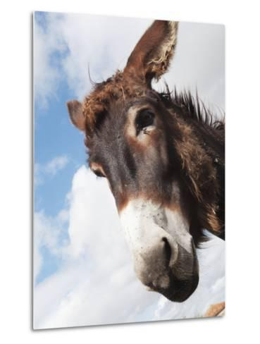 Donkey's Head Against a Blue Sky with Cloud; Charente, France-Design Pics Inc-Metal Print