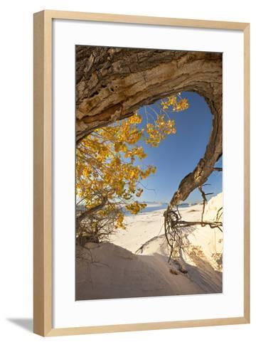 Cottonwood Tree with Fall Color in White Sands National Monument-Derek Von Briesen-Framed Art Print