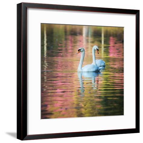 Two Swans Float on a Colorful Reflective Lake-Alex Saberi-Framed Art Print