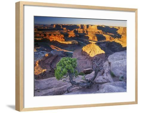 Sunrise at Dead Horse Point with Juniper, Overlooking Canyonlands National Park-Keith Ladzinski-Framed Art Print