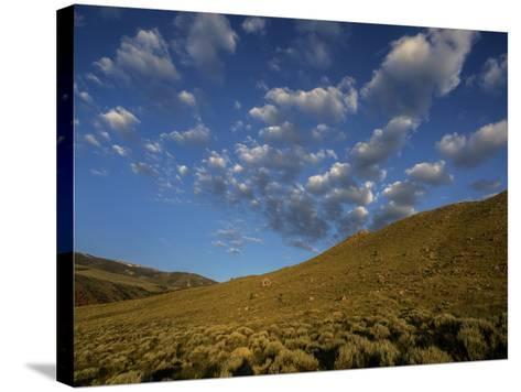 Early Morning Sunlight on a Landscape of Sagebrush with Fluffy Clouds Overhead-Jay Dickman-Stretched Canvas Print