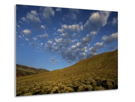 Early Morning Sunlight on a Landscape of Sagebrush with Fluffy Clouds Overhead-Jay Dickman-Metal Print