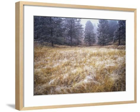 Foggy Forest with Meadow, Pike National Forest, Colorado-Keith Ladzinski-Framed Art Print
