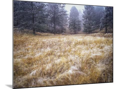 Foggy Forest with Meadow, Pike National Forest, Colorado-Keith Ladzinski-Mounted Photographic Print