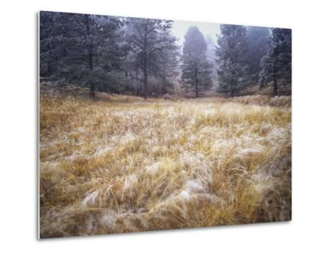 Foggy Forest with Meadow, Pike National Forest, Colorado-Keith Ladzinski-Metal Print
