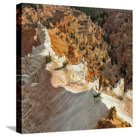 A High Angle View of Hoodoos in Cedar Breaks National Monument, a Natural Amphitheater-Babak Tafreshi-Stretched Canvas Print