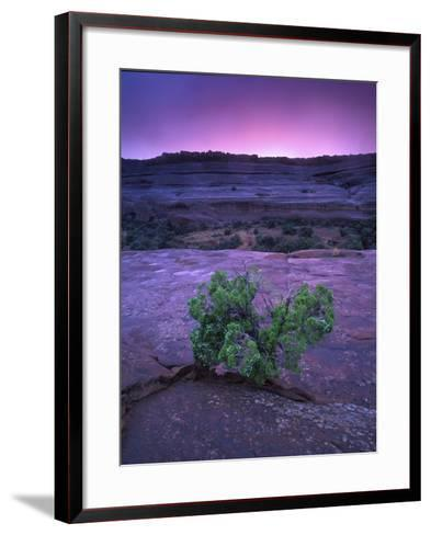 A Lone Juniper Grows Out of Sandstone in the Foreground of a Colorful Sunset-Keith Ladzinski-Framed Art Print