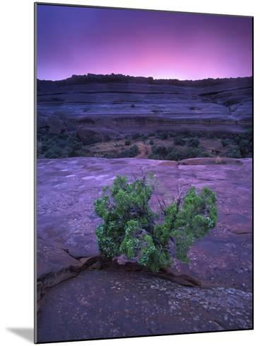 A Lone Juniper Grows Out of Sandstone in the Foreground of a Colorful Sunset-Keith Ladzinski-Mounted Photographic Print