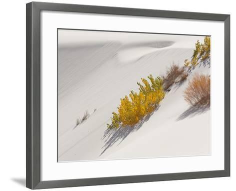 Cottonwood Trees with Fall Color and Salt Cedar in White Sands National Monument-Derek Von Briesen-Framed Art Print