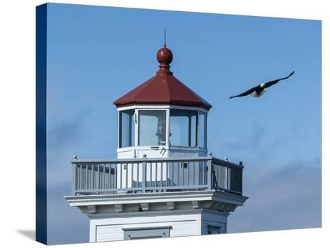 An Eagles Flies Above the Patos Island Lighthouse-Michael Melford-Stretched Canvas Print