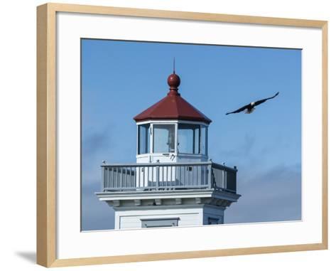 An Eagles Flies Above the Patos Island Lighthouse-Michael Melford-Framed Art Print