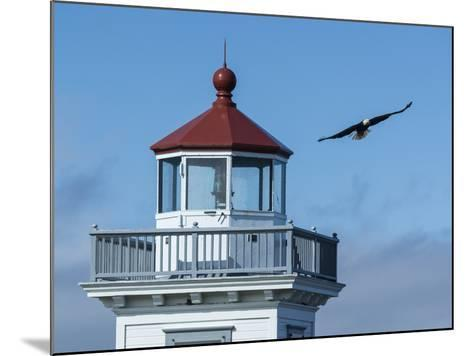An Eagles Flies Above the Patos Island Lighthouse-Michael Melford-Mounted Photographic Print