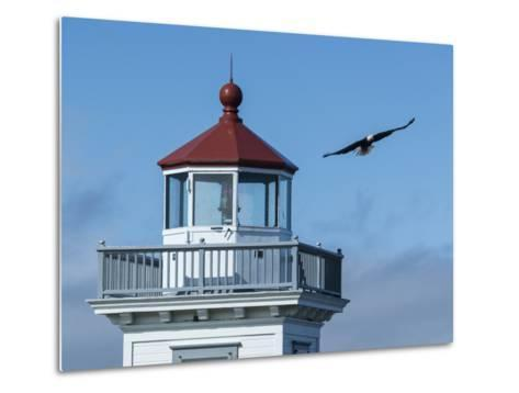 An Eagles Flies Above the Patos Island Lighthouse-Michael Melford-Metal Print