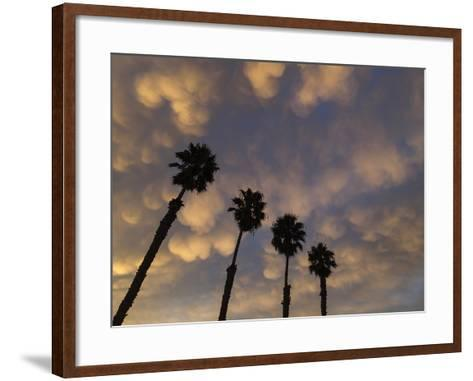 Mexican Fan Palms at Sunrise-Michael Melford-Framed Art Print