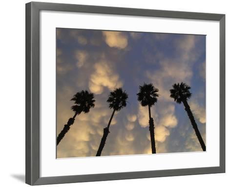 Mexican Fan Palms at Sunrise-Michael Melford-Framed Art Print