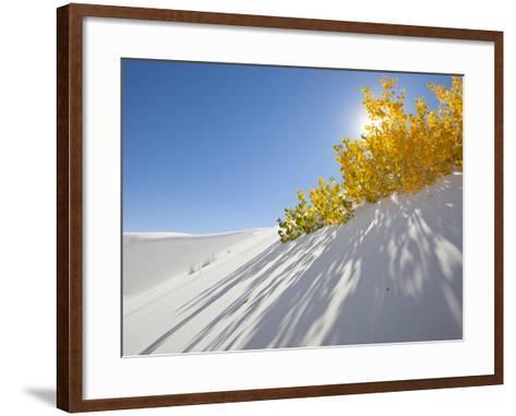 Cottonwood Trees with Fall Color in White Sands National Monument-Derek Von Briesen-Framed Art Print
